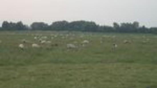 Schäferei 1 (27.06.2013)
